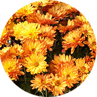 test-pastille2-fleur