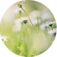 test-pastille3-fleur