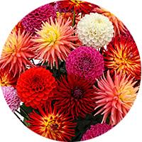 test-pastille4-fleur