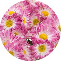test-pastille5-fleur
